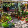 Flowers-at-the-Farmers-Market-Downtown-Sunnyvale_D818357