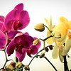 Mixed Orchids #3