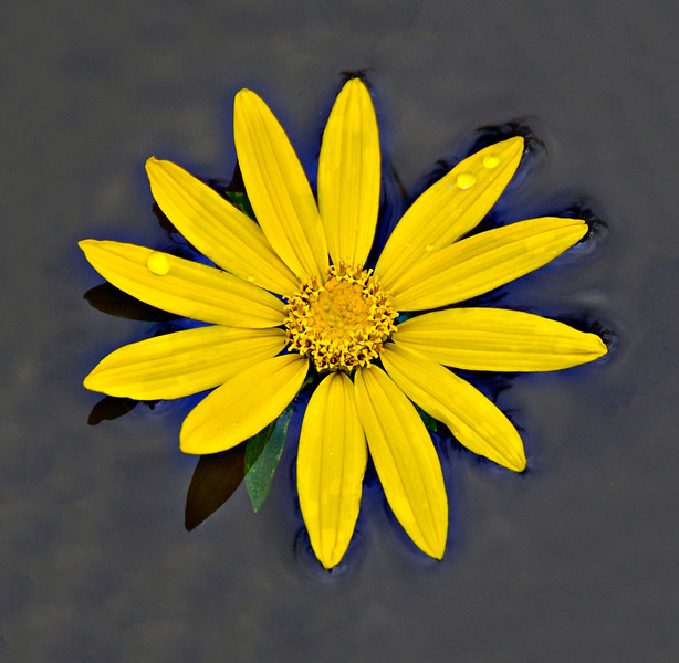 Floating Wild Flower