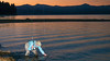 Landing a Nice Smallmouth Bass at Twilight, Lake Almanor CA