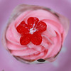 Pink cupcake with red flower