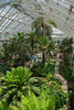 Kew Gardens - Inside Temperate House.