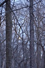 010_Winter Forest _29_Photo-by-Johnny-Nevin