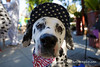 Burlingame_Dog_Parade_4357