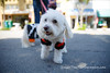 Burlingame_Dog_Parade_4607