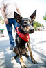 Burlingame_Dog_Parade_4635