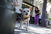 Burlingame_Dog_Parade_4420
