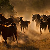 Lisa Mardell_Advanced_RanchHorses, NewMexico