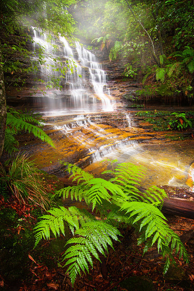 Junction Falls After the Rain - Blue Mountains NSW
