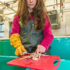 Fisheries major Christy Howard measures king crab growth at UAF's Lena Point facility near Juneau.  Filename: AAR-14-4058-16.jpg
