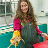 Fisheries major Christy Howard measures king crab growth at UAF's Lena Point facility near Juneau.  Filename: AAR-14-4058-20.jpg
