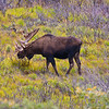 Photos were taken during three days in August, 2010 within Denali National Park and Preserve.