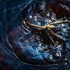 A dragonfly scuttles on the surface of Ballaine Lake on a summer afternoon.  Filename: AKA-13-3893-1.jpg