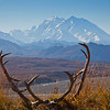 Mt. McKinley dominates the skyline near Eielson Visitors Center in Denali National Park and Preserve.