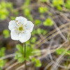 "An assortment of wild flowers flourish during the brief summer on Alaska's north slope.  <div class=""ss-paypal-button"">Filename: AKA-14-4218-018.jpg</div><div class=""ss-paypal-button-end""></div>"