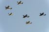US warbird formation
