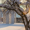 """January afternoon sunshine filters through the trees on the Fairbanks campus.  <div class=""""ss-paypal-button"""">Filename: CAM-14-4039-4.jpg</div><div class=""""ss-paypal-button-end""""></div>"""