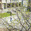 "Green up is seen on campus during spring of 2014  <div class=""ss-paypal-button"">Filename: CAM-14-4171-13.jpg</div><div class=""ss-paypal-button-end""></div>"