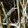 Green Heron - 12/14/2014 - Poway Creek