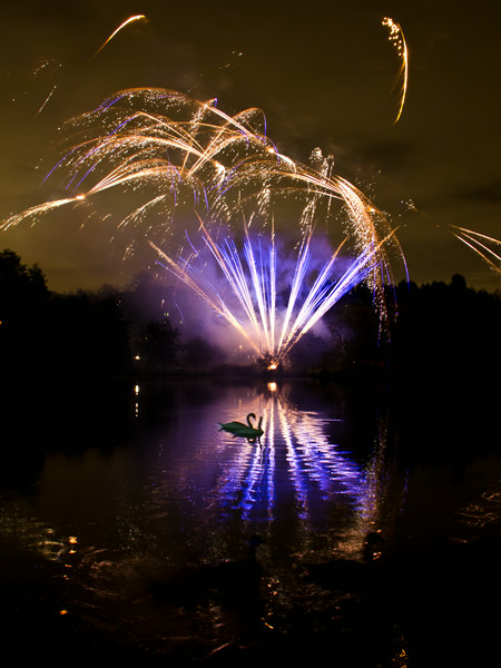 Swans and Fireworks 3