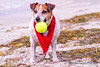 20140706dog_beach_pet_photography_Tampa_Stephaniellenphotography com-_MG_0204-Edit