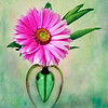 Pink Daisy on Green
