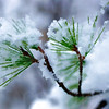 Snowy Branches 001 | Wall Art Resource