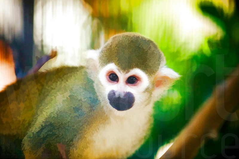 Zoo Monkey | Wall Art Resource