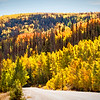 Colorado Fall Foliage 036 | Wall Art Resource