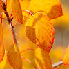 Autumn Leaves In Autumn 017 | Wall Art Resource