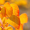 Autumn Leaves In Autumn 016 | Wall Art Resource