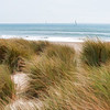 Grassy Beach 004 | Wall Art Resource