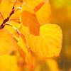 Autumn Leaves In Autumn 019 | Wall Art Resource