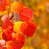 Autumn Leaves In Autumn 009 | Wall Art Resource