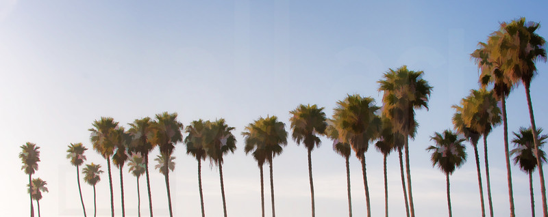 Group Of Palm Trees 002   Wall Art Resource