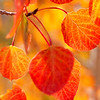 Autumn Leaves In Autumn 011 | Wall Art Resource