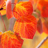 Autumn Leaves In Autumn 012 | Wall Art Resource