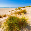 Grassy Beach 002 | Wall Art Resource