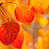 Autumn Leaves In Autumn 010 | Wall Art Resource