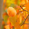 Autumn Leaves In Autumn 007 | Wall Art Resource