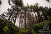Trail at Cape Lookout State Park in the Oregon Coast<br /> <br /> © Copyright Hannah Pastrana Prieto