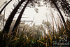 Trees and Grass at Cape Lookout State Park in the Oregon Coast<br /> <br /> © Copyright Hannah Pastrana Prieto