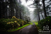 Foggy trail at Cape Lookout State Park in the Oregon Coast<br /> <br /> © Copyright Hannah Pastrana Prieto