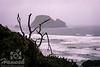View of Three Arch Rocks located in the Oregon Coast<br /> <br /> © Copyright Hannah Pastrana Prieto