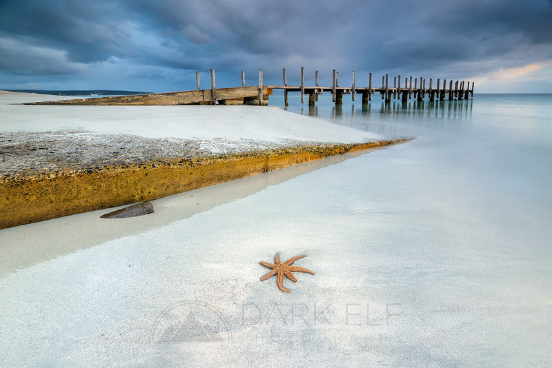 Quindalup Starfish