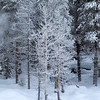Frosted Trio with geyser steam