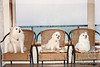 Close-up of a pair of Maltese and an American Eskimo<br /> <br /> © Copyright Hannah Pastrana Prieto