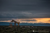 pumpjack_sunset_mountains_shoshoni_wyoming