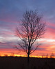 Tree - Sky - Sunset