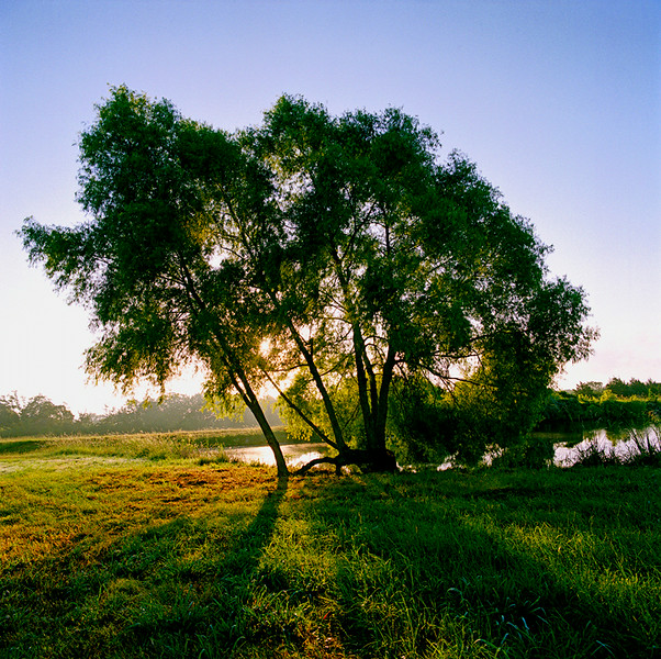 Sunrise and Willows , Texas